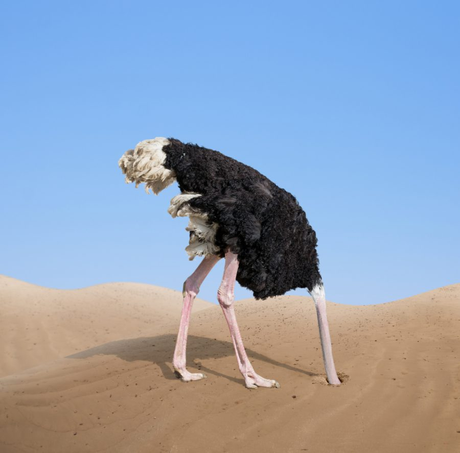 about ostrich in hindi