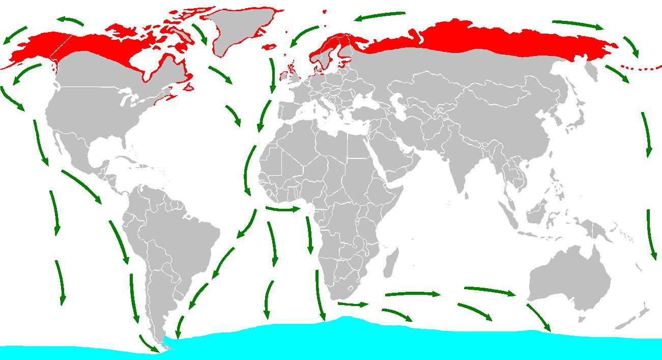 Маршруты миграции полярных крачек