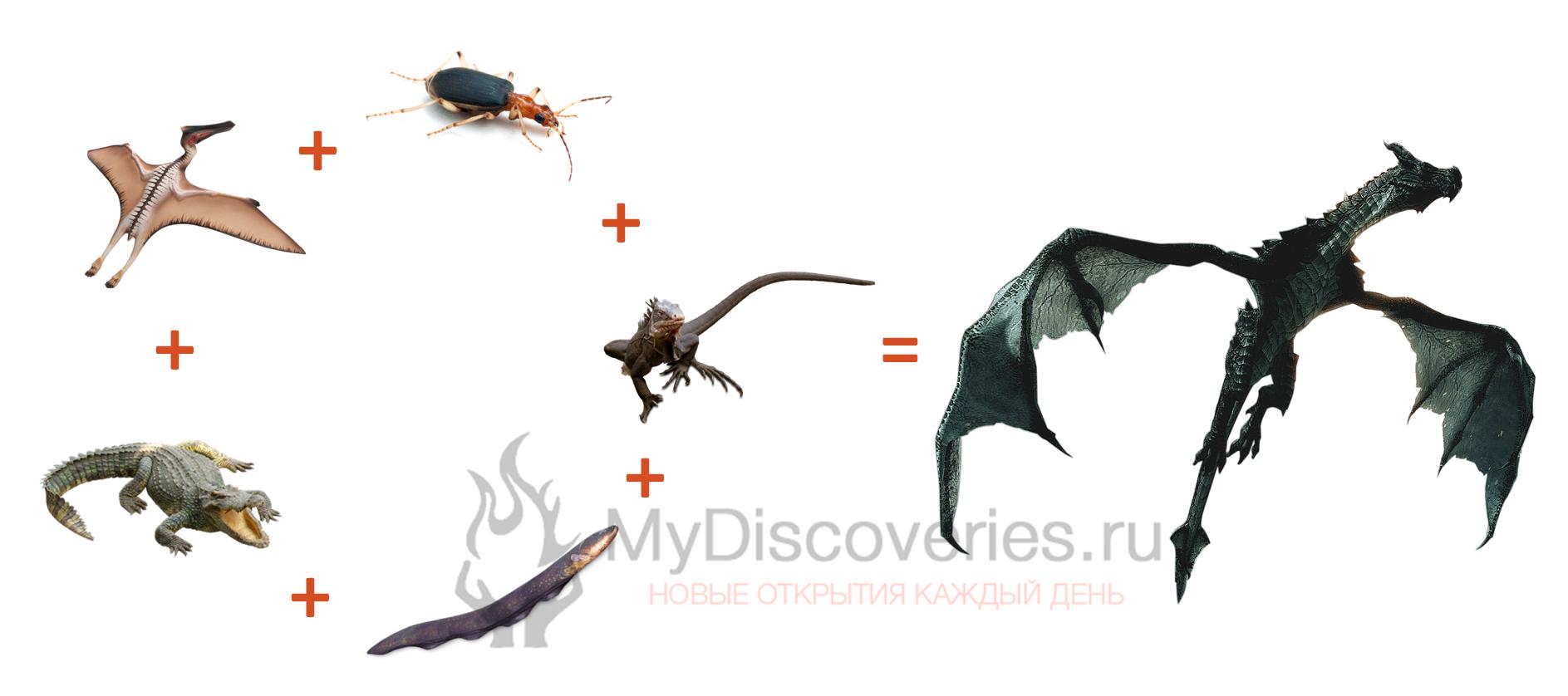 драконы на планете эволюция