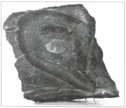 TriassicShoeSole