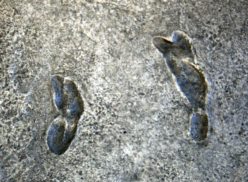Этим отпечаткам около 3,6 млн. лет   wikipedia