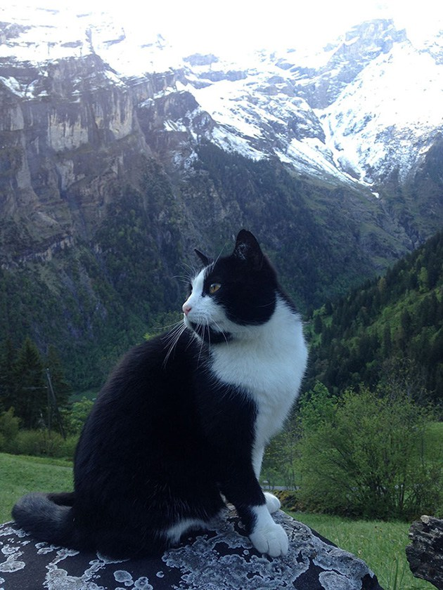 cat-guide-man-mountain-gimmelwald-switzerland-5