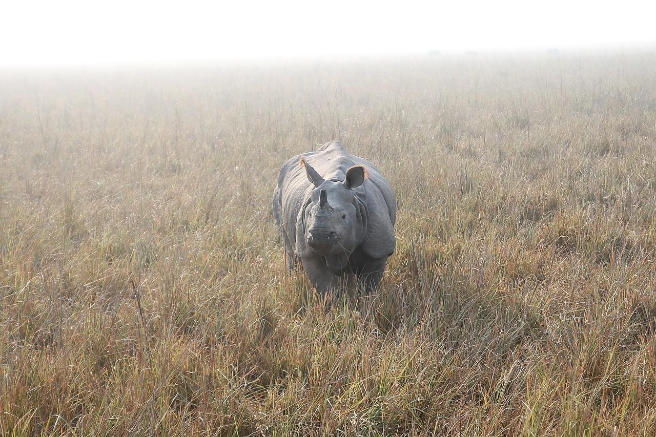 rhino-804414_1280