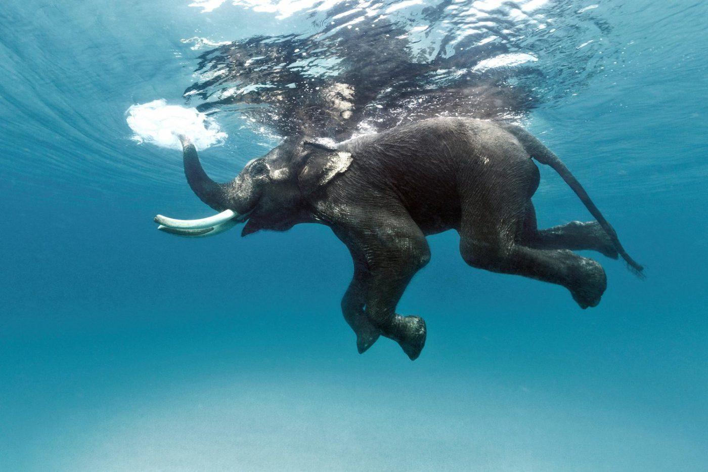 Картинки слон животное как нарисовать менее