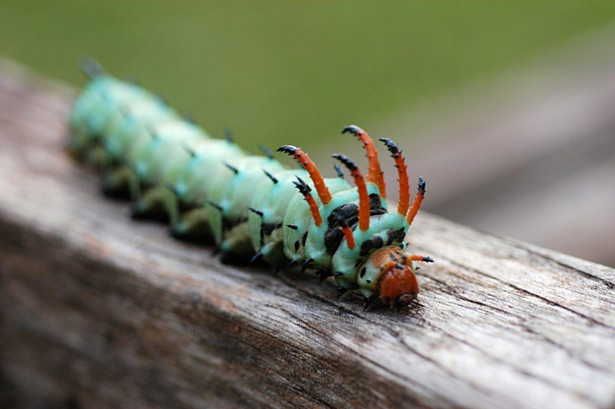 картинки редких гусениц салоне