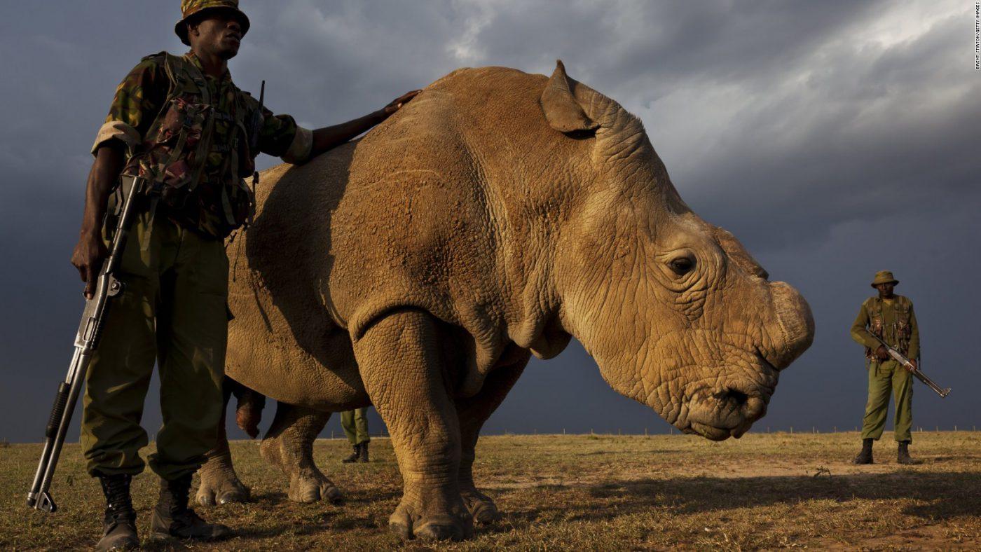 Картинки с вымирающими видами животными